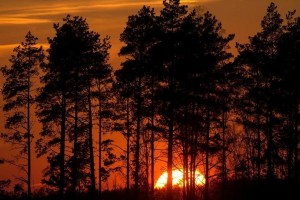 Η φωτογραφία της ημέρας: Ο ήλιος δύει πίσω από τα δέντρα σε δάσος στη Λευκορωσία!