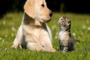 Ένα μακάβριο θέαμα για τους κατοίκους: Μαζική θανάτωση σκύλων στη Στυλίδα!
