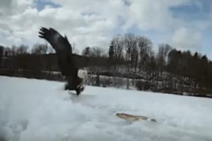 Απίστευτο βίντεο: Άνδρας έπιασε ψάρι και του το άρπαξε αετός!