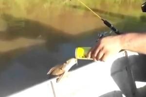 Ψάρι με τάσεις αλκοολισμού: Βγήκε από το νερό για να δοκιμάσει μπύρα! (Video)