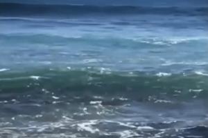 Βίντεο σοκ: Δείτε την στιγμή που ένας καρχαρίας επιτίθεται σε σέρφερ!