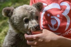 Στη φροντίδα του Αρκτούρου ο μικρός Λουίτζι! - Οι πρώτες ημέρες στο καταφύγιο (photo & video)