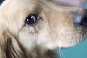 Βίντεο που ραγίζει καρδιές: Σκυλί κλαίει μετά από διάσωση και γίνεται viral (video)