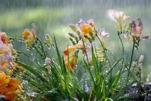 Η φωτογραφία της ημέρας: Μια ανοιξιάτικη βροχή!
