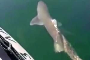 Βίντεο - σοκ: Καρχαρίας σε παραλία μια ανάσα από την Αθήνα! (video)