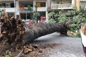 Σοκ στην Θεσσαλονίκη: Τεράστιο δέντρο καταπλάκωσε οχήματα στο κέντρο!