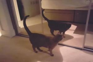 Επικό βίντεο: Τι γίνεται όταν μία γάτα βλέπει για πρώτη φορά τον εαυτό της στον καθρέφτη!
