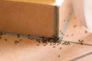 4 εύκολοι τρόποι για να κρατήσετε τα μυρμήγκια μακριά από το σπίτι σας!