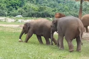 Το Μουντιάλ… των ελεφάντων: Ένας ξεχωριστός ποδοσφαιρικός αγώνας (video)