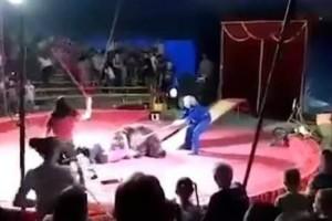 Τραγικό: Εβαλαν την αρκούδα να κάνει σκέιτ κι εξαγριωμένη επιτέθηκε σε θηριοδαμαστή! (video)