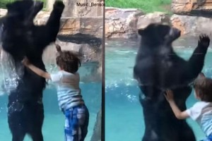 Μοναδικό βίντεο: Αρκούδα χοροπηδά ρυθμικά με ένα αγοράκι!