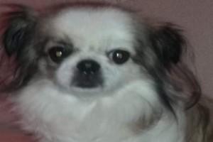 Σοκ στην Εύβοια: Το εγκληματικό λάθος στο κούρεμα που σκότωσε αυτό το γλυκό σκυλάκι!