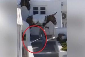 Βίντεο - σοκ: Χτυπούν με μανία τα γαϊδουράκια στην Σαντορίνη!