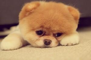 Αδιανόητο: Αυτό για τα σκυλιά αποκλείεται να το γνώριζες!