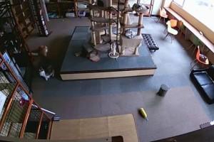 Απίστευτο: Δείτε πώς αντέδρασαν οι γάτες λίγα δευτερόλεπτα πριν σημειωθεί σεισμός! (Video)