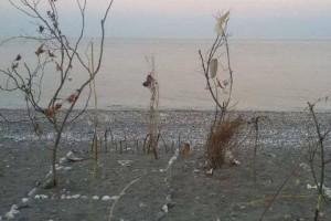 Αγιά: Διαμαρτυρία τουριστών - Στόλισαν τα δέντρα με σκουπίδια (photos)