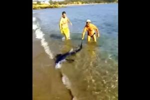 Συναγερμός στα Χανιά: Καρχαρίας προκάλεσε πανικό στην παραλία! (video)