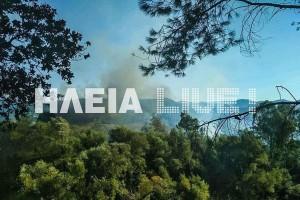 Πυρκαγιά στην Ηλεία! - Μεγάλη κινητοποίηση της πυροσβεστικής