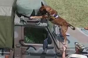Εντυπωσιακό βίντεο: Έτσι εκπαιδεύονται οι στρατιωτικοί σκύλοι