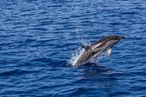 Απίστευτο θέαμα στη Σκύρο: Δελφίνι βγαίνει στα ρηχά για παιχνίδι (video)