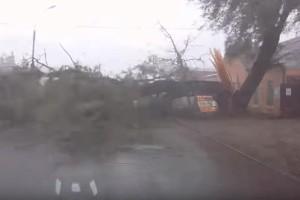 Την γλίτωσε την τελευταία στιγμή! - Δέντρο πέφτει μπροστά σε οδηγό! (Video)