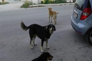 Αγιά: Αδέσποτο σκυλί επιτέθηκε σε 8χρονη!