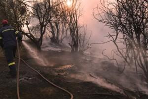 Εύβοια: Σε εξέλιξη τρία πύρινα μέτωπα! Συνεχίζεται η μάχη με τις φλόγες (video)