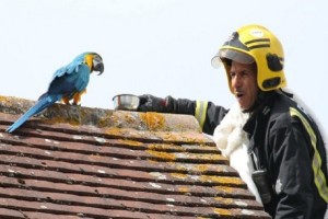 Επικό: Παπαγάλος έβρισε πυροσβέστες που πήγαν να τον σώσουν! (video)