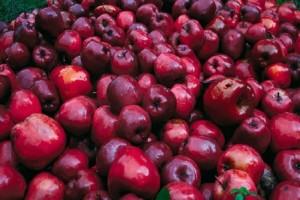 Τι άλλο θα ακούσουμε! Υπάλληλοι σουπερμάρκετ απολύθηκαν γιατί πούλησαν… 15.000 μήλα!