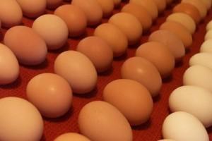 Πώς θα χρησιμεύσουν τα αυγά που έχουν λήξει;
