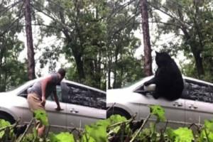 Αρκούδα κλειδώθηκε στο αυτοκίνητο οικογένειας! (video)