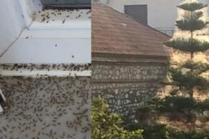 Φρίκη στο Αιτωλικό: Oι ιστοί αραχνών σκέπασαν και τα σπίτια!