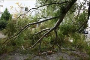 Θεσσαλονίκη: Αγριεύει ο «Ξενοφών»! Ξεριζώθηκαν δέντρα, ζημιές σε ΙΧ (video)