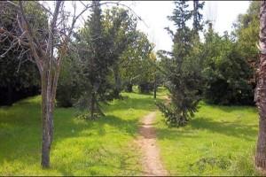 Άνδρας βρέθηκε κρεμασμένος σε δέντρο στο Άλσος Βεΐκου!