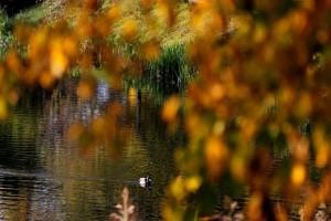 Η φωτογραφία της ημέρας: Στιγμιότυπο από πάρκο στο Μινσκ της Λευκορωσίας!