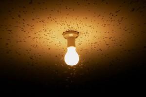 Το γνωρίζατε; Γιατί τα έντομα πετάνε προς στις λάμπες;