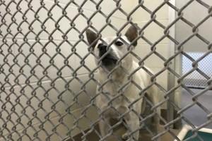 Κτηνωδία: Διεστραμμένο ζευγάρι βίαζε τον σκύλο του σε αυτοσχέδιο «δωμάτιο οργίων»!