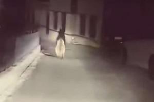 Μέτσοβο: Γυρνούσε σπίτι του και συνάντησε μια... αρκούδα στον δρόμο! (video)