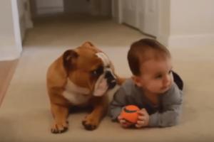 Αξιολάτρευτα: Σκυλάκια και γάτες προσέχουν μωρά!