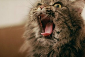 Σοκ: Πέθανε από δάγκωμα λυσσασμένης γάτας!