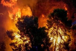 Ισχυρή πυρκαγιά στην Πελοπόννησο!