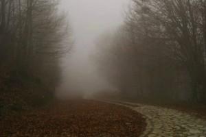 Η φωτογραφία της ημέρας: Μια χειμωνιάτικη βόλτα!