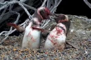 Πιγκουίνος γυρίζει σπίτι και πιάνει την γυναίκα του με άλλον: Το ξύλο που ακολούθησε δεν υπάρχει! (video)