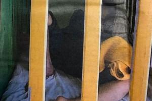 Φρίκη στα Λεχαινά: 18χρονη ζει για 10 χρόνια μέσα σε κλουβί και χωρίς όνομα!