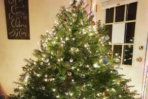 Ζώδια και σπίτι: Το Χριστουγεννιάτικο δέντρο που πρέπει να στολίσεις βάση ζωδίου!