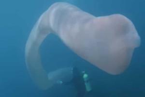 Νέα Ζηλανδία: Σοκ με μυστηριώδες πλάσμα που εντοπίστηκε στον βυθό! (video)