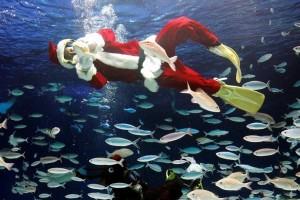 Η φωτογραφία της ημέρας: Ένας δύτης ντυμένος Άγιος Βασίλης κολυμπά σε δεξαμενή!