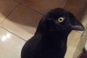 Βλέπεις ένα κοράκι ή ένα μια γάτα; Η νέα σπαζοκεφαλιά που έχει μπερδέψει το ίντερνετ!