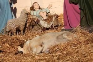Κτηνωδία στο Βελεστίνο: Δηλητηρίασαν με φόλα αδέσποτο που είχε βρει καταφύγιο στην χριστουγεννιάτικη φάτνη!