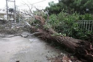 Τραγωδία στην Επανομή: Άνδρας καταπλακώθηκε από δέντρο!